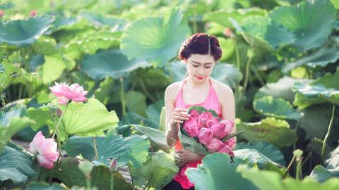 Cánh đồng sen Ninh Thuận đẹp ngất ngây